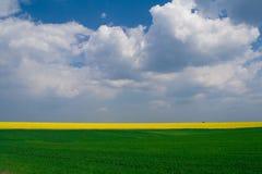 blé de zone de canola Photo libre de droits