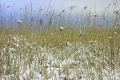 Blé en hiver Images stock