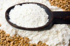 Blé et farine Image stock