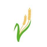 Blé Logo Template d'agriculture Images libres de droits