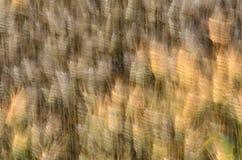 Blé soufflé du vent Photo stock