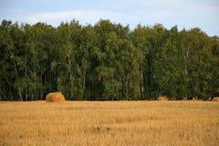 Blé Straw Roll, champ, arbres verts, ciel bleu, cultivant, élevage, moissonnant Images libres de droits