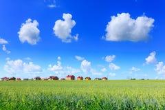 Blé vert dans le domaine Construction des cottages résidentiels je photographie stock