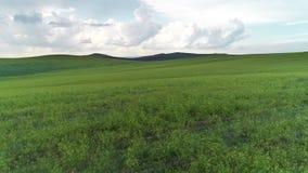 Blé vert de la Russie d'agriculture d'été de pré de champ banque de vidéos