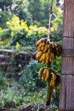 Blöcke der Bananen, die am Haken hängen Stockfotos
