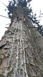 Blödande träd Royaltyfri Fotografi