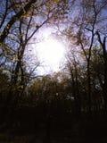 Blöt upp solen Royaltyfria Foton