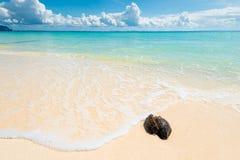 Blöta den gamla kokosnöten på en öde strand med vit sand mot arkivbild