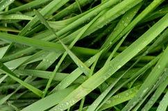 Blöta gräs Royaltyfri Fotografi