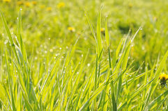 Blöta gräs Arkivbilder