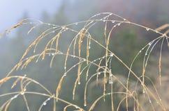Blöta gräs i mist Arkivbild