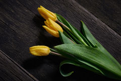 Blöta gula Tulip Flowers på tabellen Arkivbild