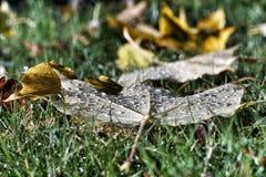 Blöta hösten lämnar Royaltyfri Bild
