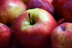 Blöta röda äpplen Royaltyfri Fotografi