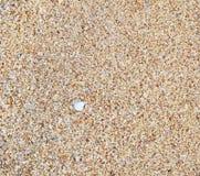 Blöta sand Royaltyfri Foto