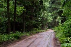 Blöta slingan till och med skog Arkivbild
