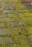 Blöta stentrottoar med mossa Fotografering för Bildbyråer