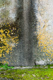 Blöta väggen Fotografering för Bildbyråer