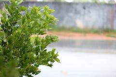 Blöta växten i regnig dag Arkivbild