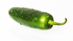 Blöta varm peppar för den gröna jalapenoen Arkivfoto