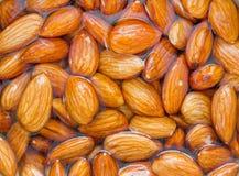 Blötta rå mandlar som är tokiga i vatten Royaltyfri Fotografi