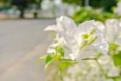 Blühen Stockbild