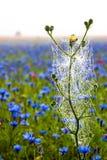 Blühen Stockbilder