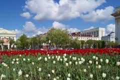 Blühen der Tulpen Lizenzfreies Stockfoto