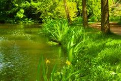 Blühen des Grases im Sommer reflektiert im Kanal stockfoto
