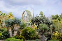 Blühen des unterschiedlichen Kaktus mit Blumen in der Wüste Lizenzfreie Stockbilder
