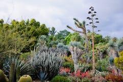 Blühen des unterschiedlichen Kaktus mit Blumen in der Wüste Lizenzfreie Stockfotografie