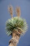 Blühen des unterschiedlichen Kaktus mit Yucca in der Wüste Stockbild