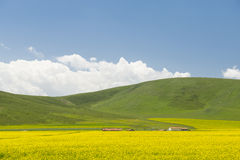 Blühen die Blume der Vergewaltigung unter dem Berg Lizenzfreies Stockfoto