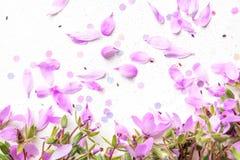 Blühen rosa Blumen auf weißem Hintergrund lizenzfreie stockbilder