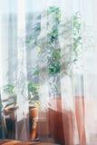 Blühen Sie auf einem Fensterrahmen Stockbilder