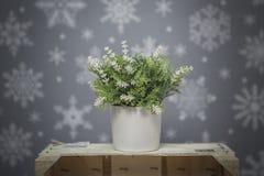 Blühen Sie auf einem grauen Hintergrund mit weißen Schneeflocken Stockbild