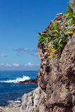 Blühen Sie auf einer Klippe auf dem Hintergrund des Ozeans Lizenzfreie Stockfotografie