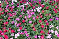 Blühen Sie bunte, bunte Blume, Flora, Blüte, die Blumenblüte, die für Hintergrund bunt ist Lizenzfreie Stockfotos