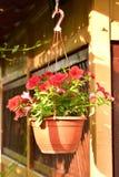 Blühen Sie den Korb, der an der Wand der hölzernen Kabine hängt stockbilder