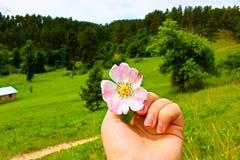 Blühen Sie in der Wiese stockfotos