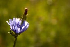 Blühen Sie in der Wiese Stockbild