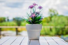 Blühen Sie in einem Blumentopf auf einer weißen Tabelle mit Hintergrund Stockfotografie
