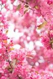 Blühen Sie Feld Stockfoto