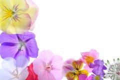 Blühen Sie Feld Stockbild