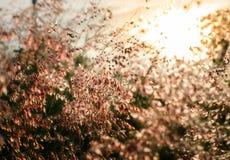 Blühen Sie Gras an sich entspannen Morgenzeit mit warmer Tonweinlese Stockfoto
