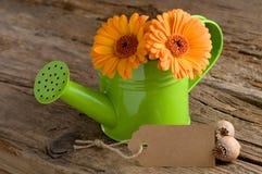 Blühen Sie Gruß mit Pappzeichen und kopieren Sie Raum Lizenzfreie Stockfotografie