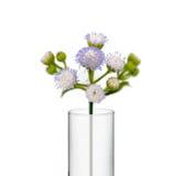 Blühen Sie im Becher, Reagenzgläser mit Blume Stockfotos