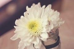 Blühen Sie im Vase auf dem hölzernen Beschaffenheitshintergrund Stockfoto