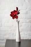 Blühen Sie im weißen Vase auf der Tabelle Stockfotografie