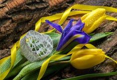 Blühen Sie Iris und Tulpen mit Wassertropfen auf hölzernem Hintergrund Stockfotos